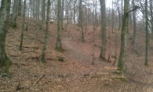 Sort sløjfe på sporet i Bjerge Skov